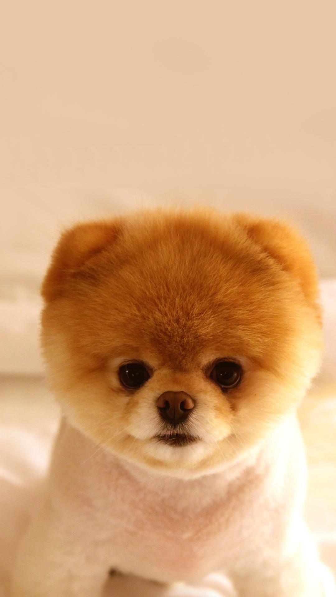 Free Hd Cutest Puppy Dog Phone Wallpaper 4982
