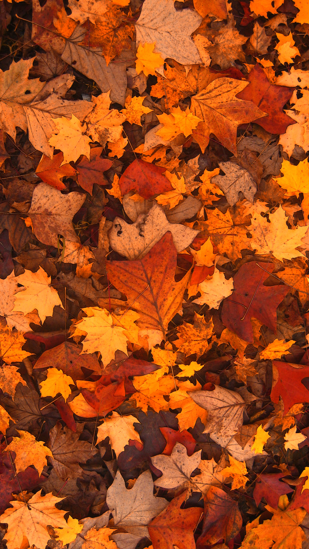 free hd fall foliage phone wallpaper1113