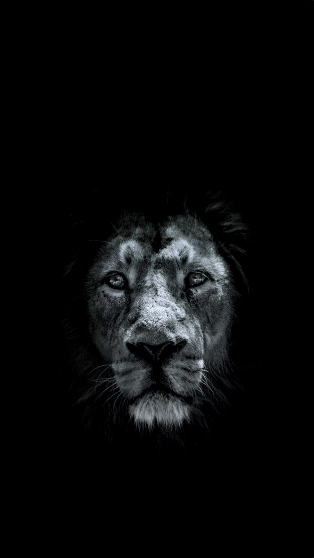 free hd lion phone wallpaper1076